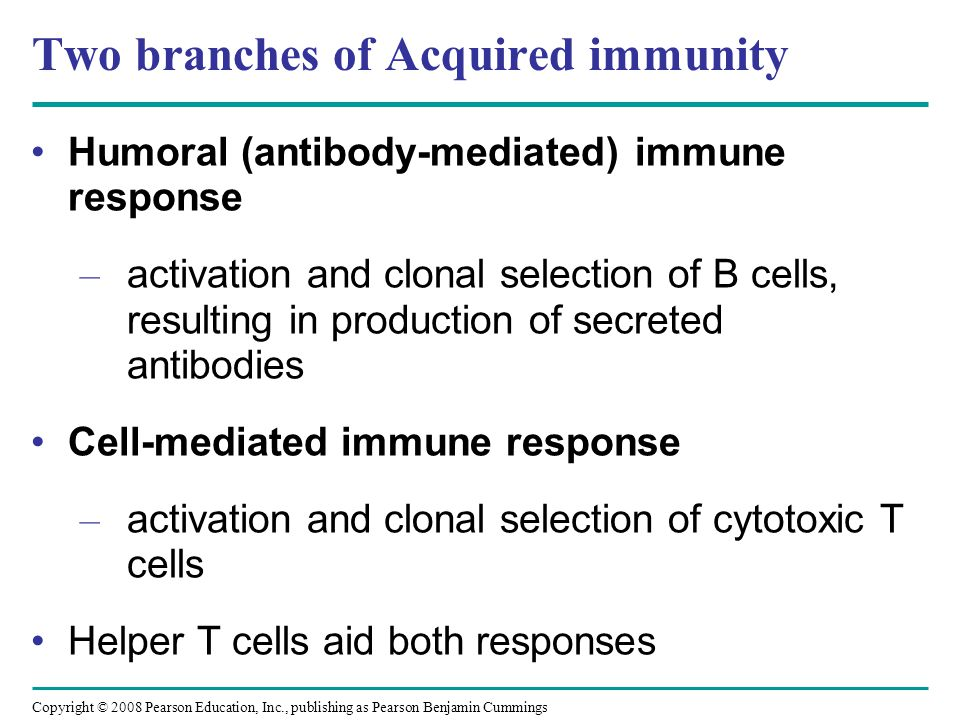 Two branches of Acquired immunity