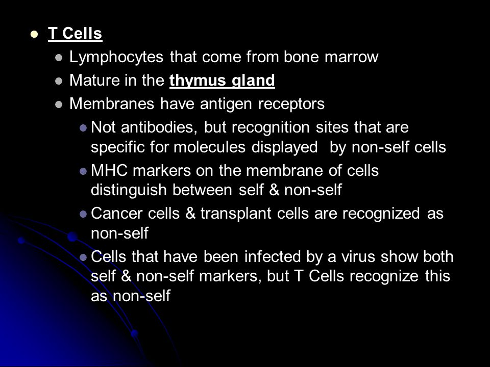 T Cells Lymphocytes that come from bone marrow. Mature in the thymus gland. Membranes have antigen receptors.