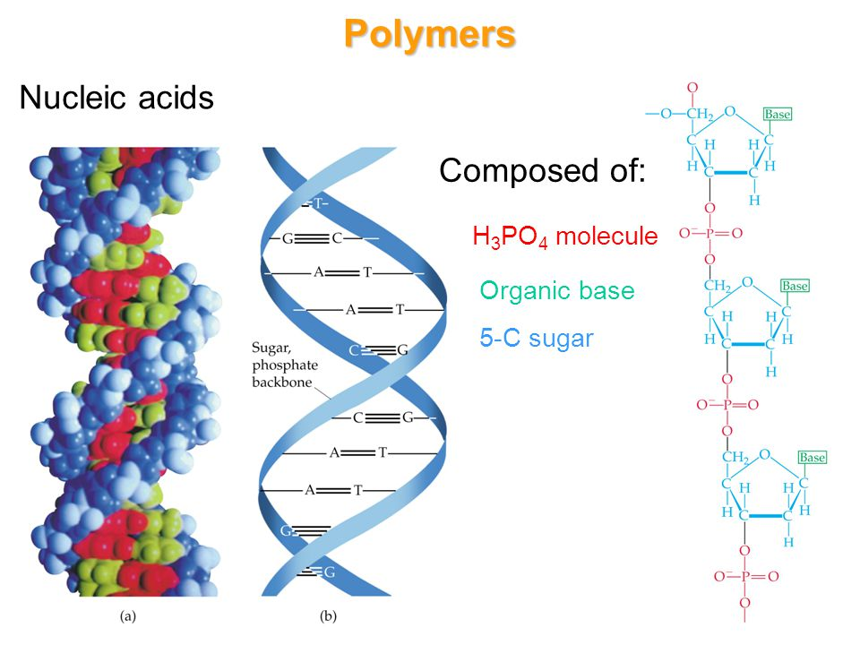 Polymers Nucleic acids Composed of: H3PO4 molecule Organic base