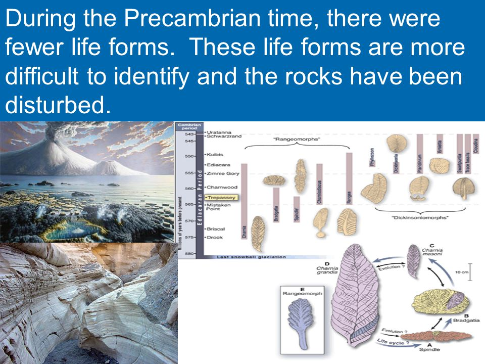The Geologic Time Scale - ppt video online download