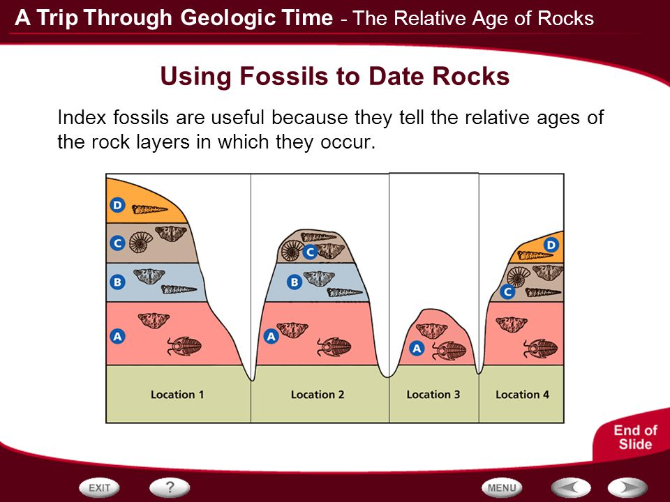Fossil Dating - Evidence for Evolution
