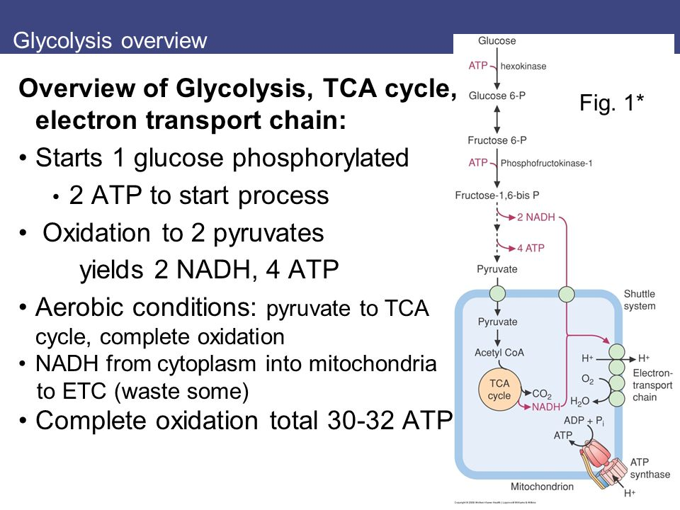 http://slideplayer.com/4450179/14/images/2/Overview+of+Glycolysis%2C+TCA+cycle%2C+electron+transport+chain%3A.jpg
