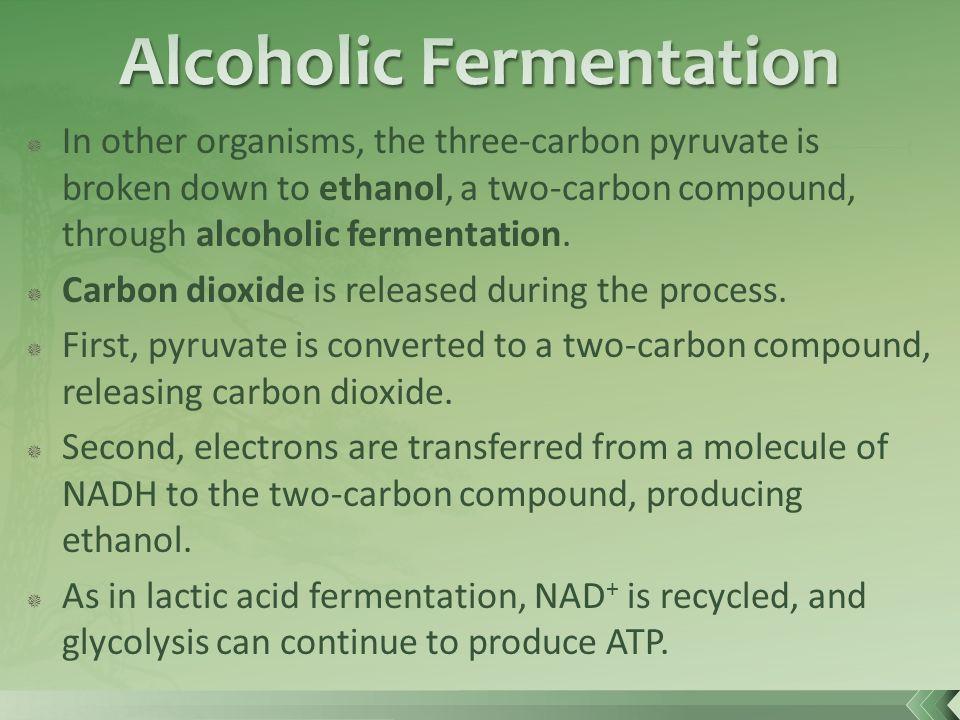 cellular respiration through alcoholic fermentation