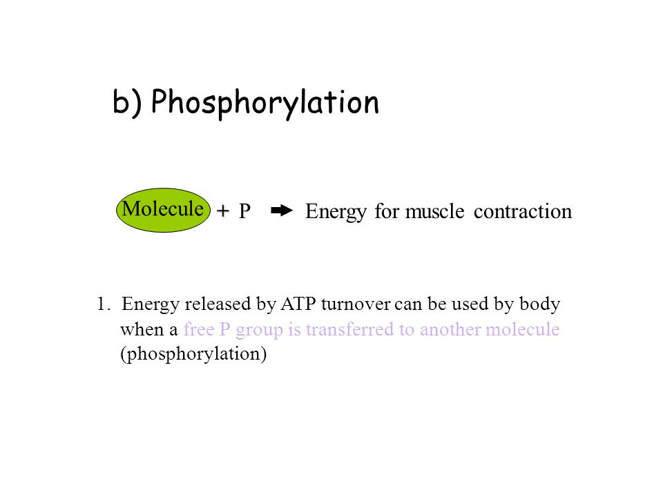 atp turnover and atp resynthesis Contribution of phosphocreatine and aerobic metabolism to energy  bogdanis-1996 contribution of phosphocreatine and aerobic  the anaerobic atp turnover,.