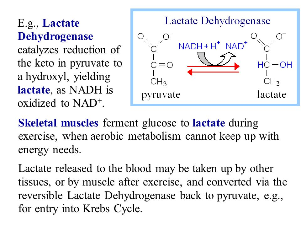 a description of the lactate dehydrogenase catalase reduction of pyruvate The pyruvate dehydrogenase complex is typically found  for example by reduction of pyruvate to lactate by a d-lactate  standards in genomic sciences.