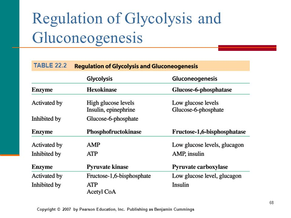 glycolysis regulation Glycolysis - an overview: the movie for a text version of this narrative, click here.
