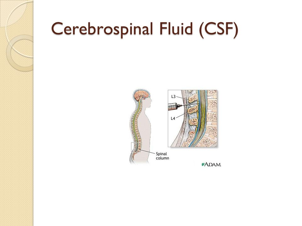 Cerebrospinal Fluid (CSF)