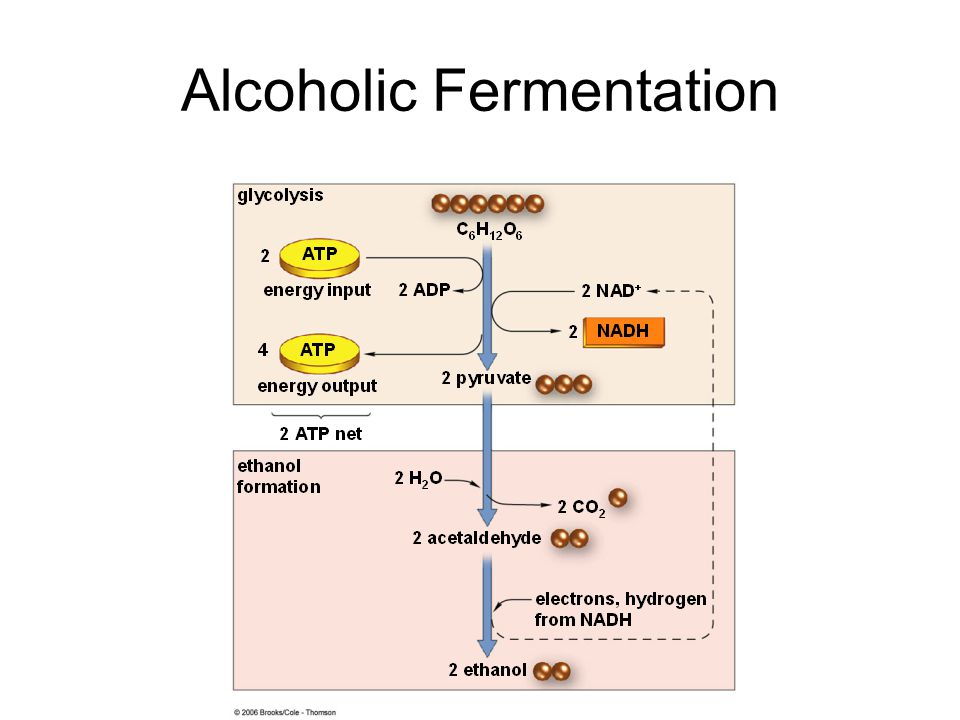 fermentation milk and chemical reactions essay Physical and chemical properties – density, freezing  changes in milk  composition  the composition of milk may change due to differences in relative  rates of  •acetic and beta-hydroxybutyric are products of fermentation in the  rumen and.