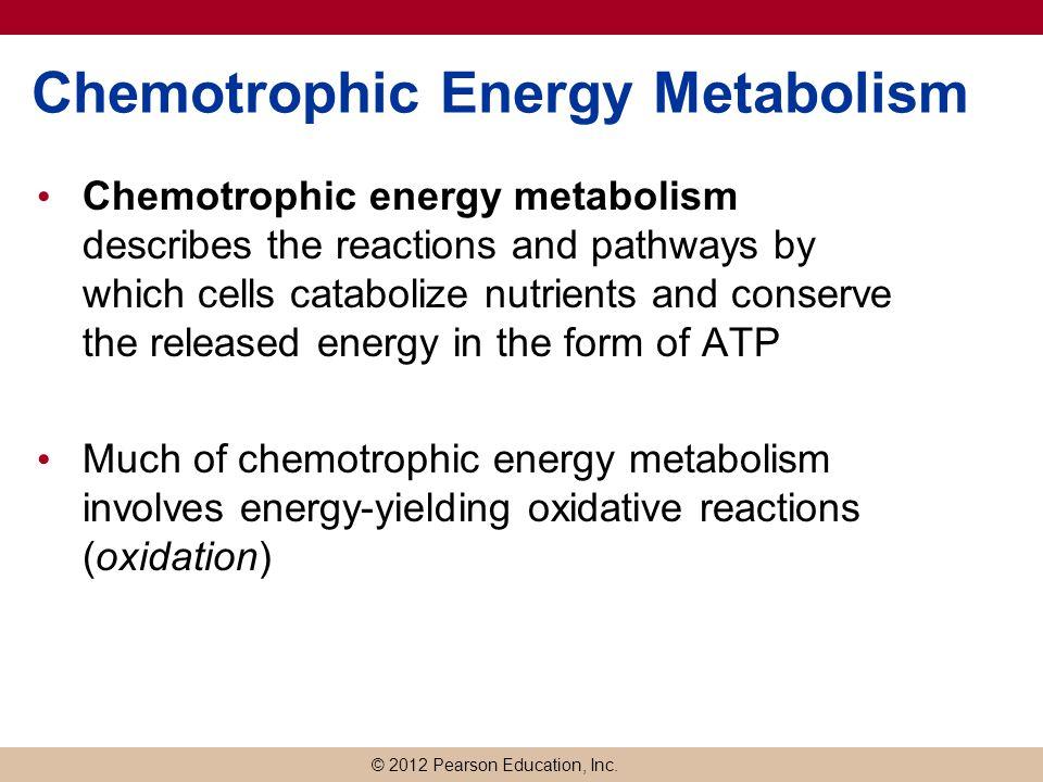 energy metabolism and cells Macroautophagy regulates energy metabolism during effector t cell activation vanessa m hubbard, rut valdor, bindi patel, rajat singh,.