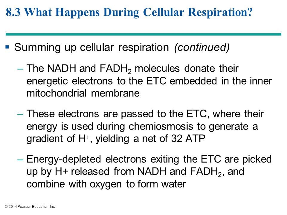 Harvesting Energy: Glycolysis and Cellular Respiration - ppt download