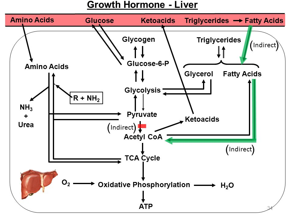 fatty acids are needed for growth essay How essential fatty acids benefit the body  essential fatty acids are specific fats that are critical to the  as well as block the growth of human breast.