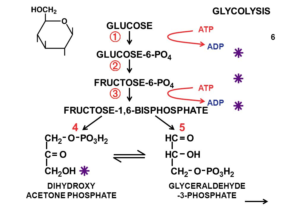 Fructose 6 phosphate glycolysis
