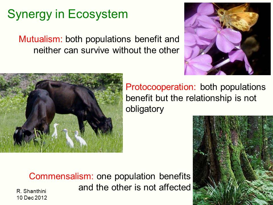 Synergy in Ecosystem Mutualism: both populations benefit and neither can survive without the other.