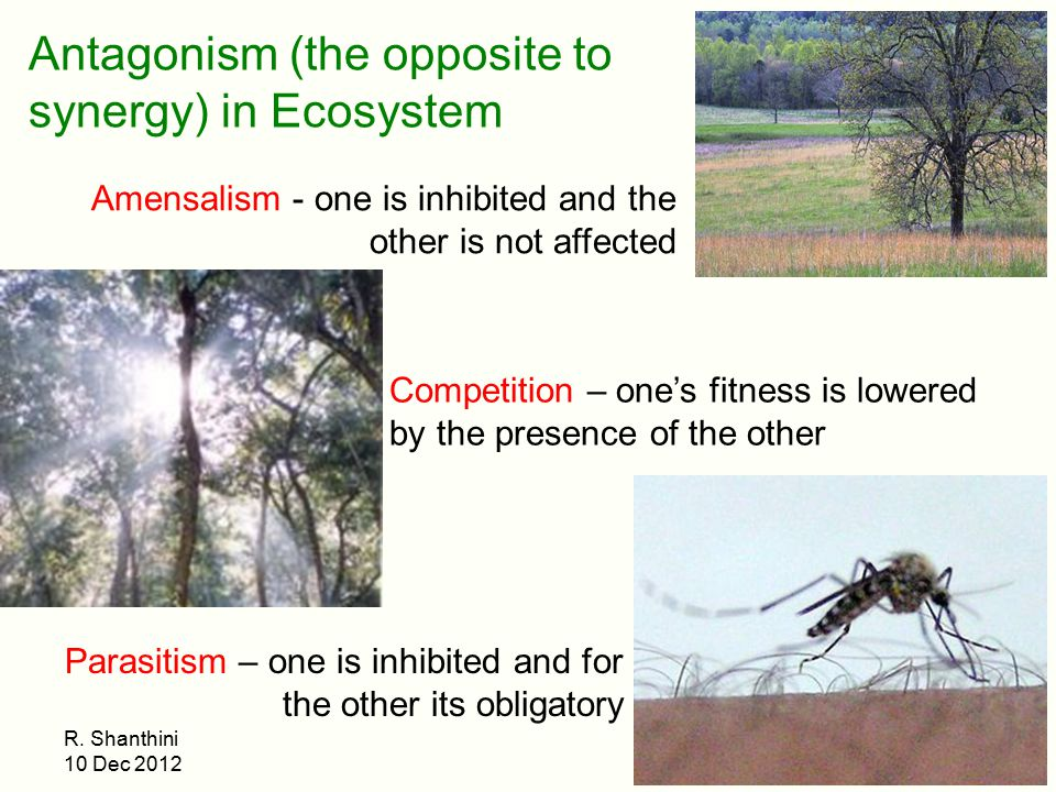 Antagonism (the opposite to synergy) in Ecosystem