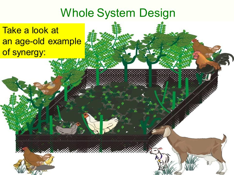 Whole System Design Take a look at an age-old example of synergy: