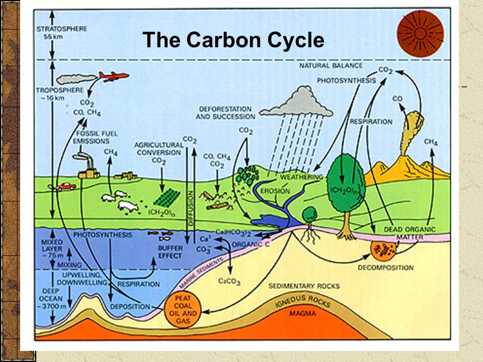the carbon cycle 2 essay The carbon cycle essay viewing now interested in the carbon cycle essay bookmark it to view later no bookmarked documents.