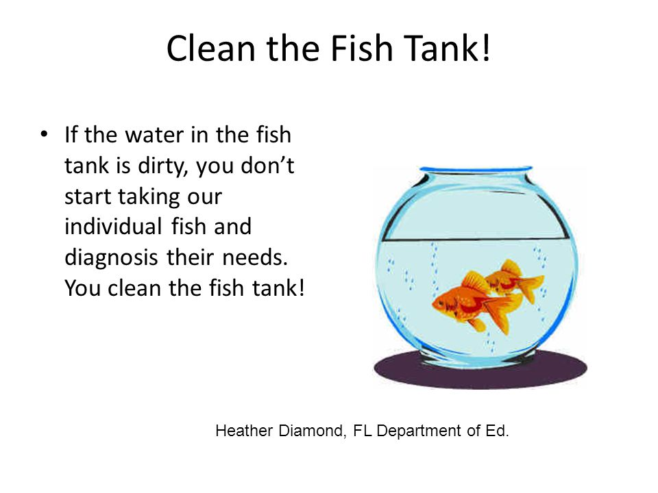 Star training of trainers ppt video online download for How do you clean a fish tank