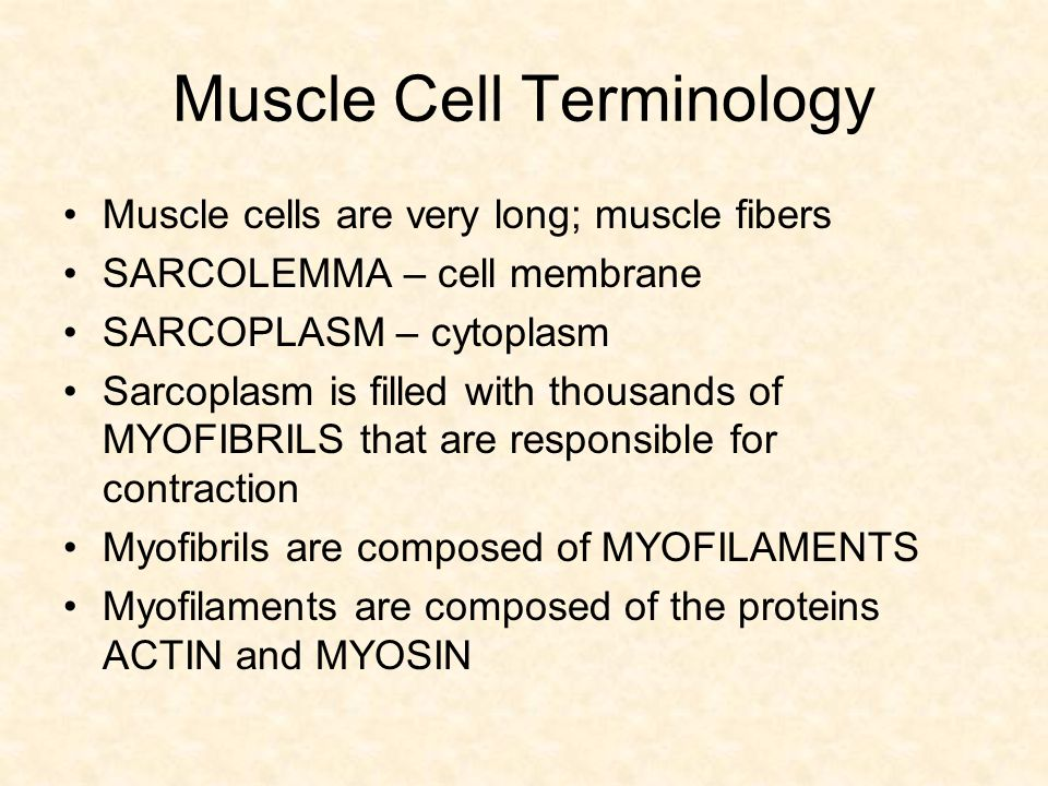 Muscle Cell Terminology