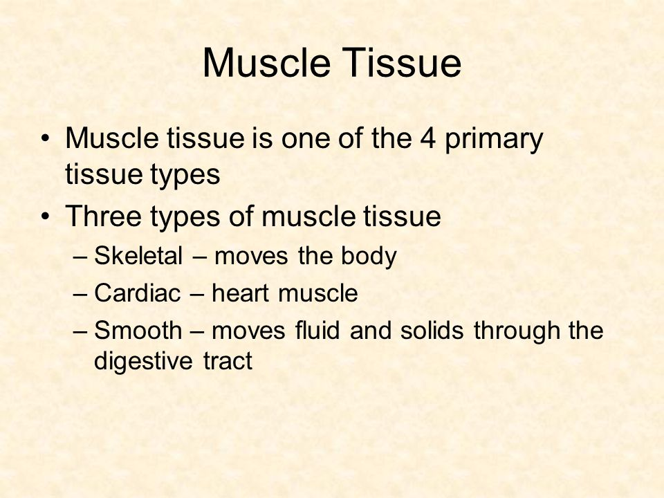 Muscle Tissue Muscle tissue is one of the 4 primary tissue types