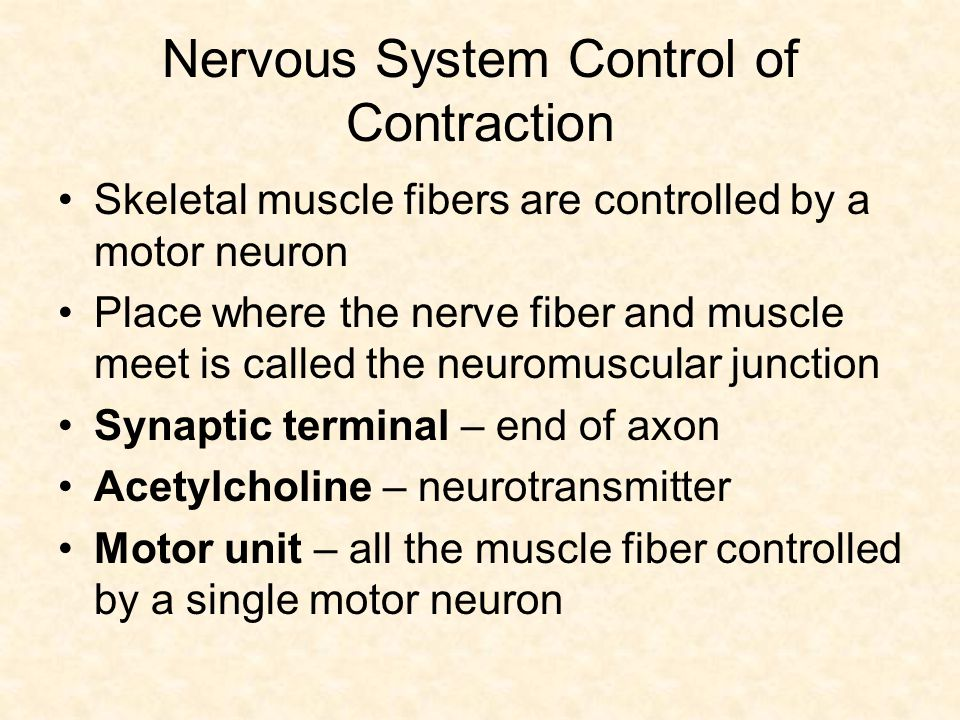 Nervous System Control of Contraction