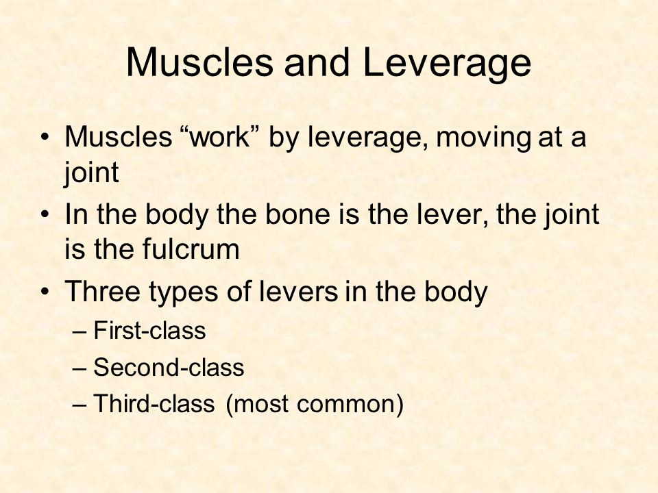 Muscles and Leverage Muscles work by leverage, moving at a joint