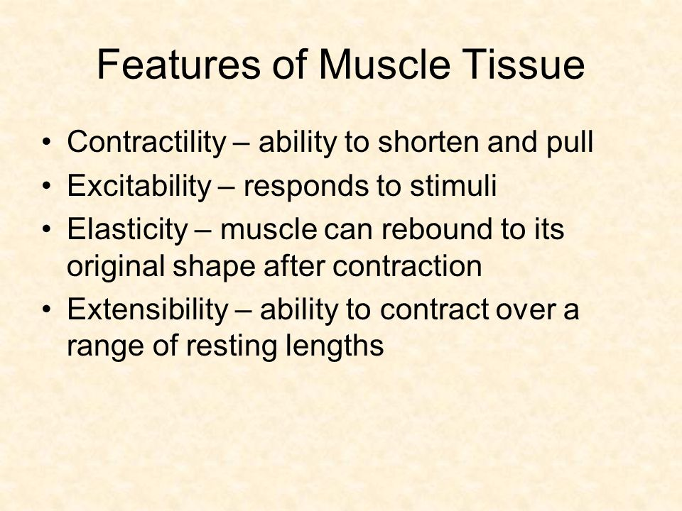 Features of Muscle Tissue