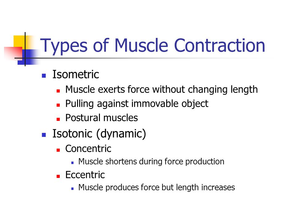 force velocity relationship in eccentric contractions and hypertrophy