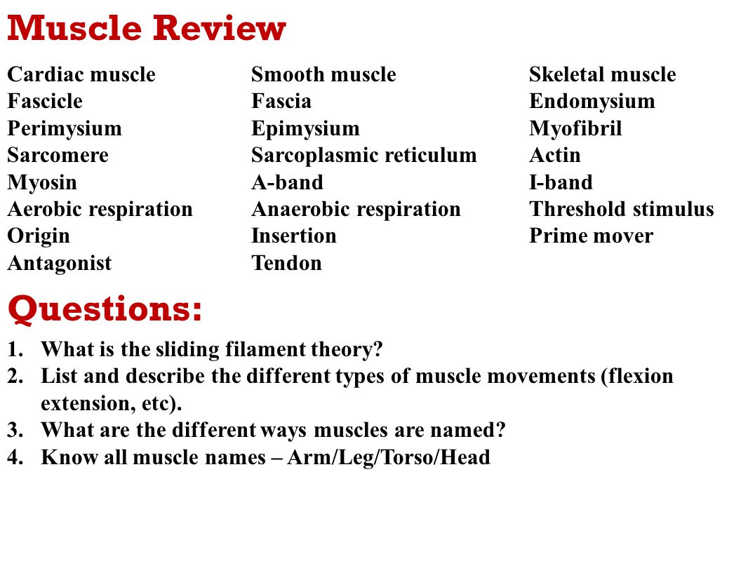 Muscular system anatomy review skeletal muscle College paper ...