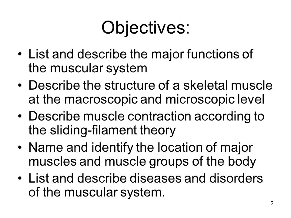 functions of the muscular system Human muscular system related to the function of movement is the muscular system's second function: the maintenance of posture and body position.