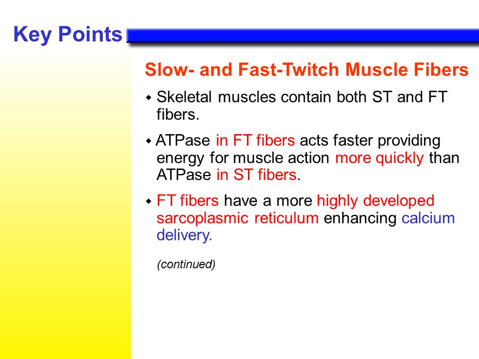 how to train fast and slow twitch muscle fibers