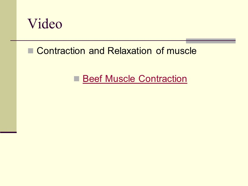 Beef Muscle Contraction