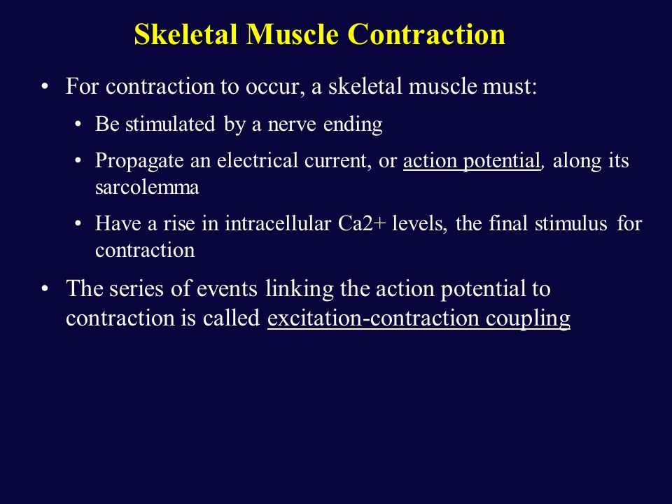 excitation contraction coupling events skeletal muscle Skeletal muscle - excitation & contraction coupling (msq drill 199)  excitation and contraction coupling in skeletal muscle connects an electrical event to a .