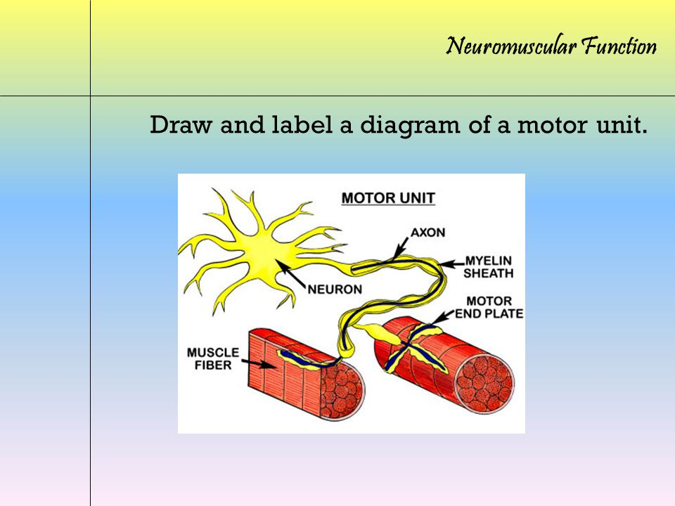 simple motor wiring diagrams draw and label a diagram of a motor unit. - ppt video ... #2