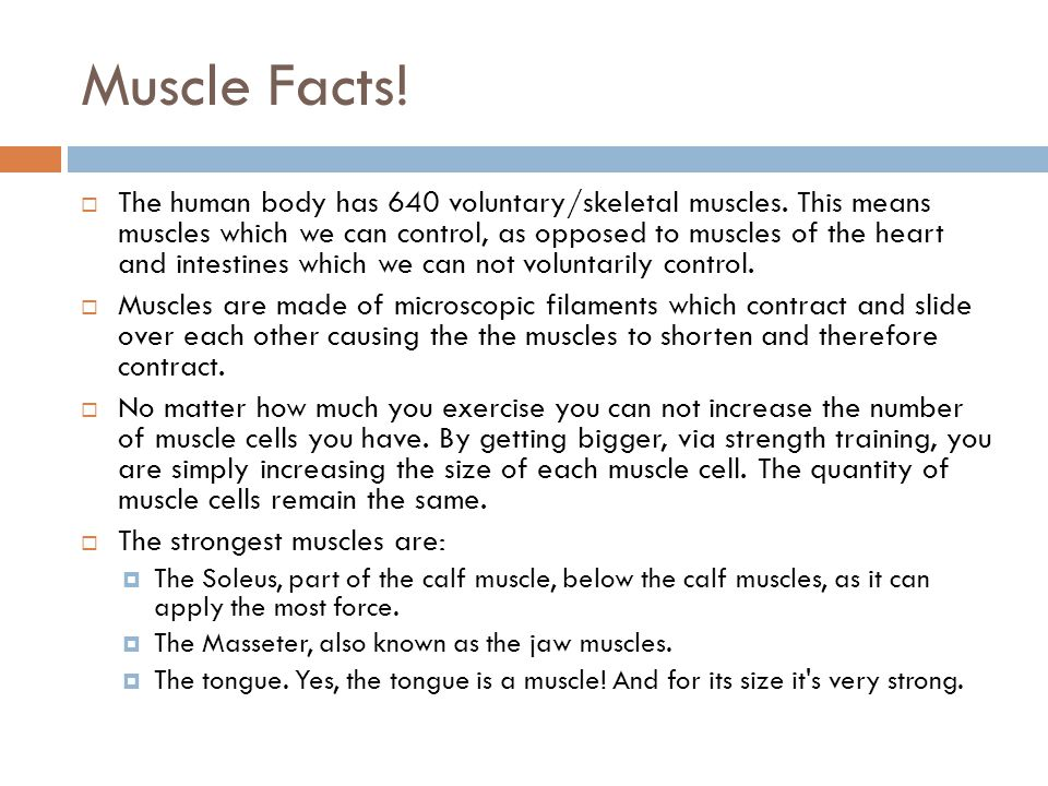muscular system. - ppt video online download, Muscles