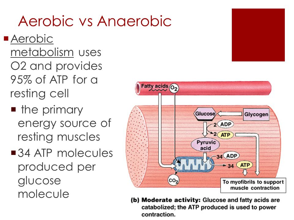 aerobic and anaerobic muscles Benefits of combining aerobic and anaerobic exercise into daily workouts visit our medical fitness center, serving windsor, greeley, loveland, colorado.