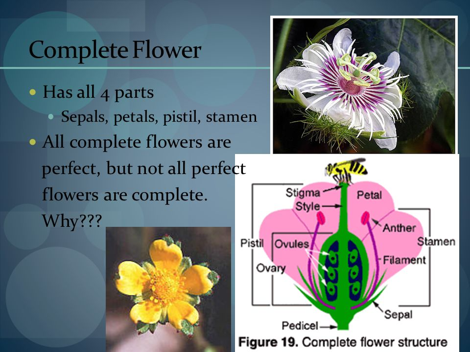 Complete Flower Has all 4 parts All complete flowers are