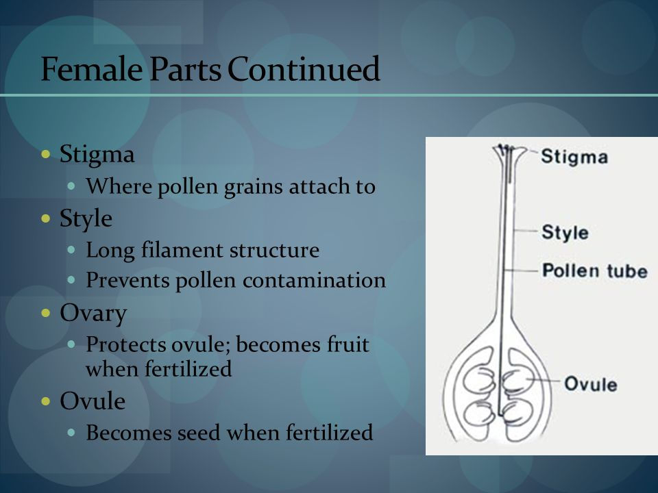 Female Parts Continued