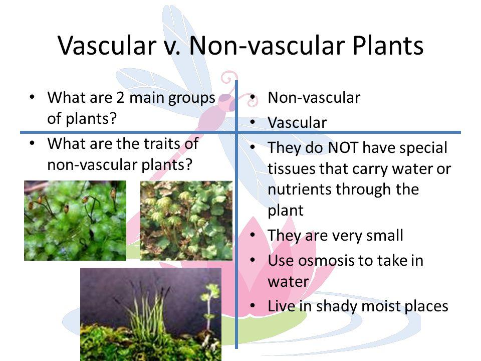 vascular plants