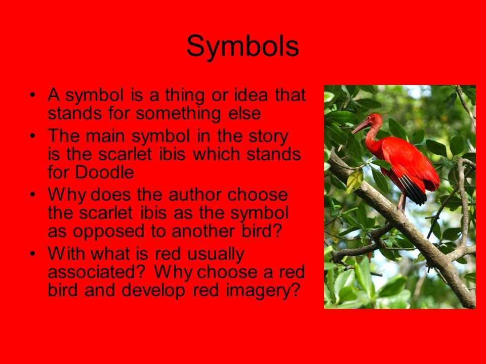 "the scarlet ibis"" discussion notes ppt  19 symbols"