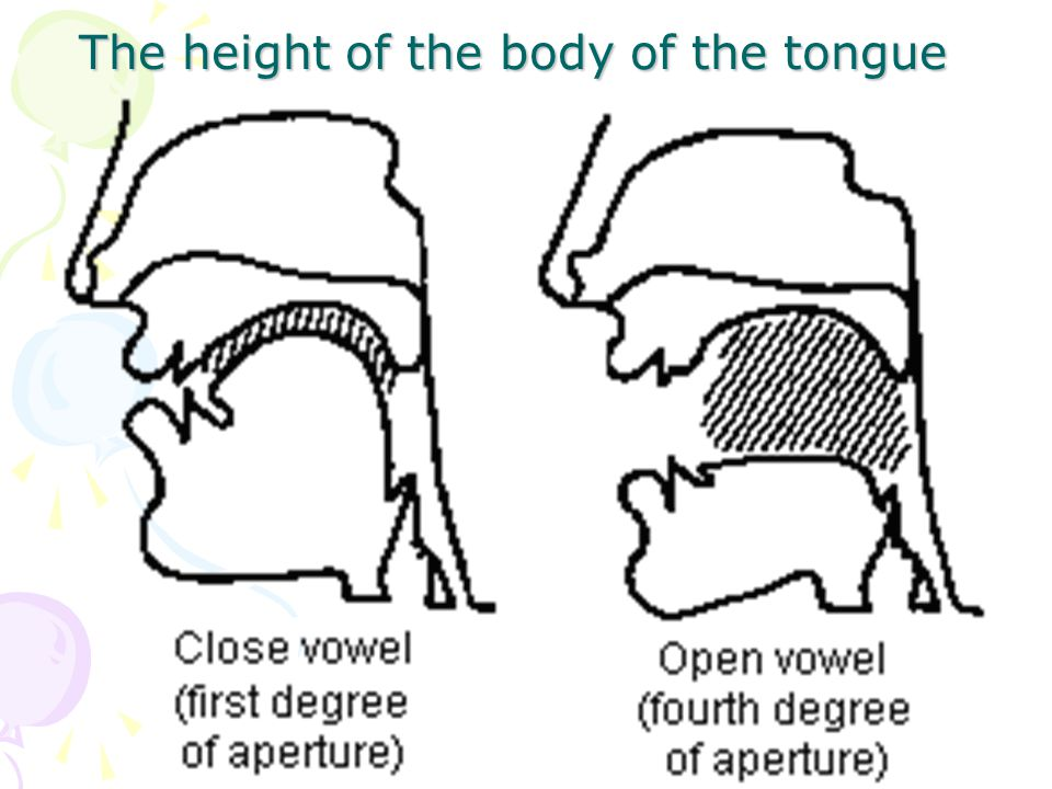 The height of the body of the tongue