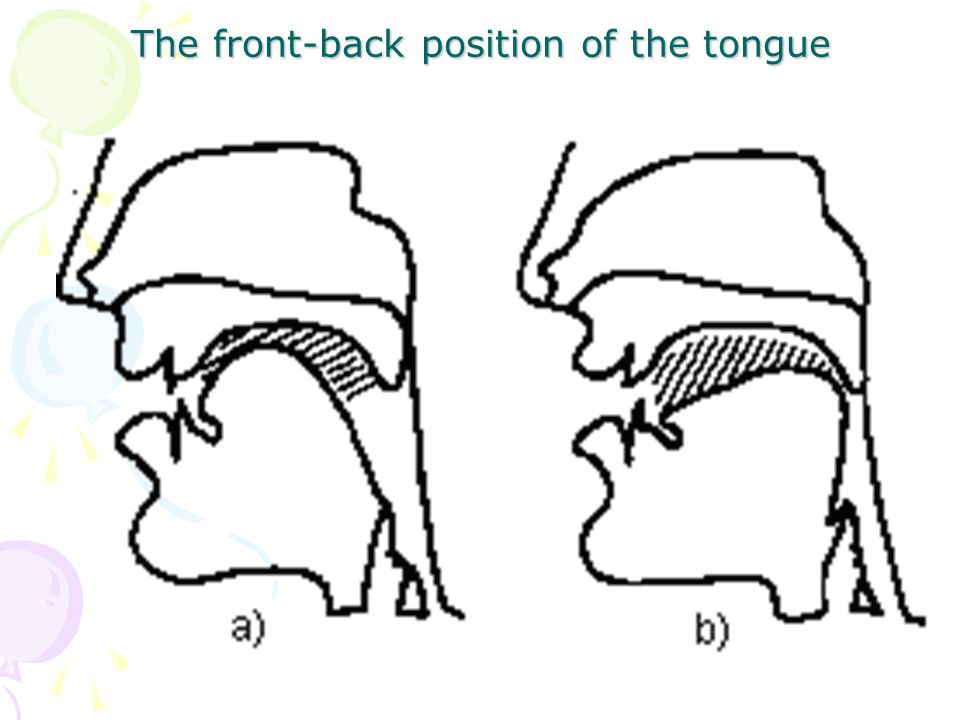 The front-back position of the tongue