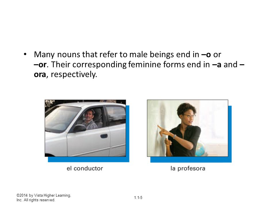Many nouns that refer to male beings end in –o or –or
