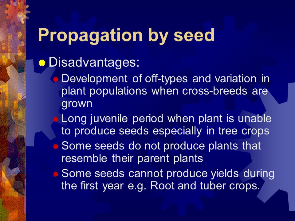 Propagation by seed Disadvantages: