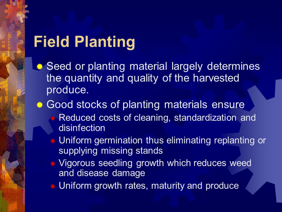 Field Planting Seed or planting material largely determines the quantity and quality of the harvested produce.