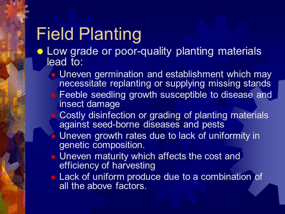 Field Planting Low grade or poor-quality planting materials lead to: