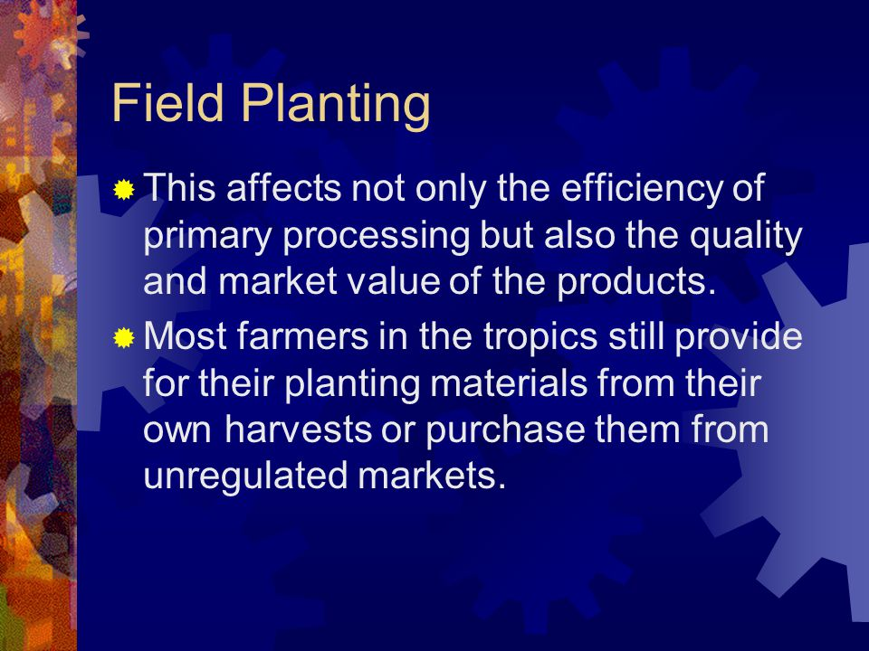 Field Planting This affects not only the efficiency of primary processing but also the quality and market value of the products.
