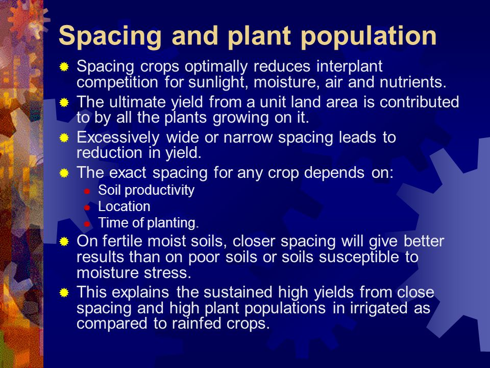 Spacing and plant population