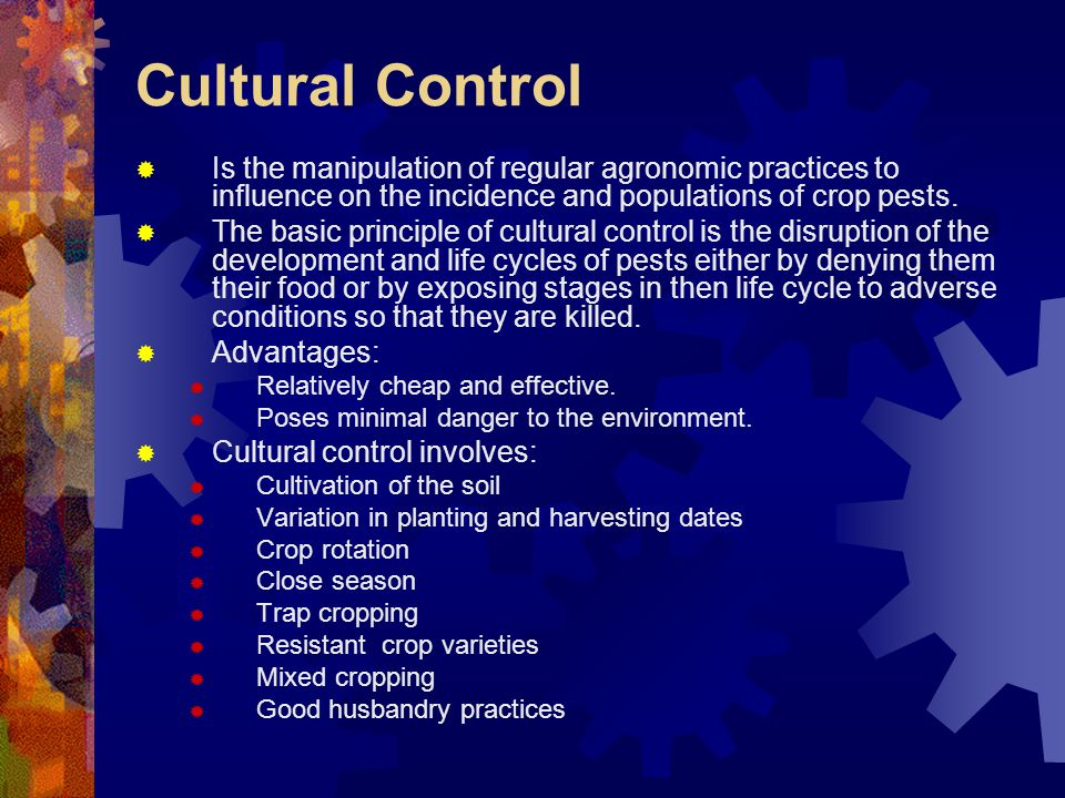 Cultural Control Is the manipulation of regular agronomic practices to influence on the incidence and populations of crop pests.