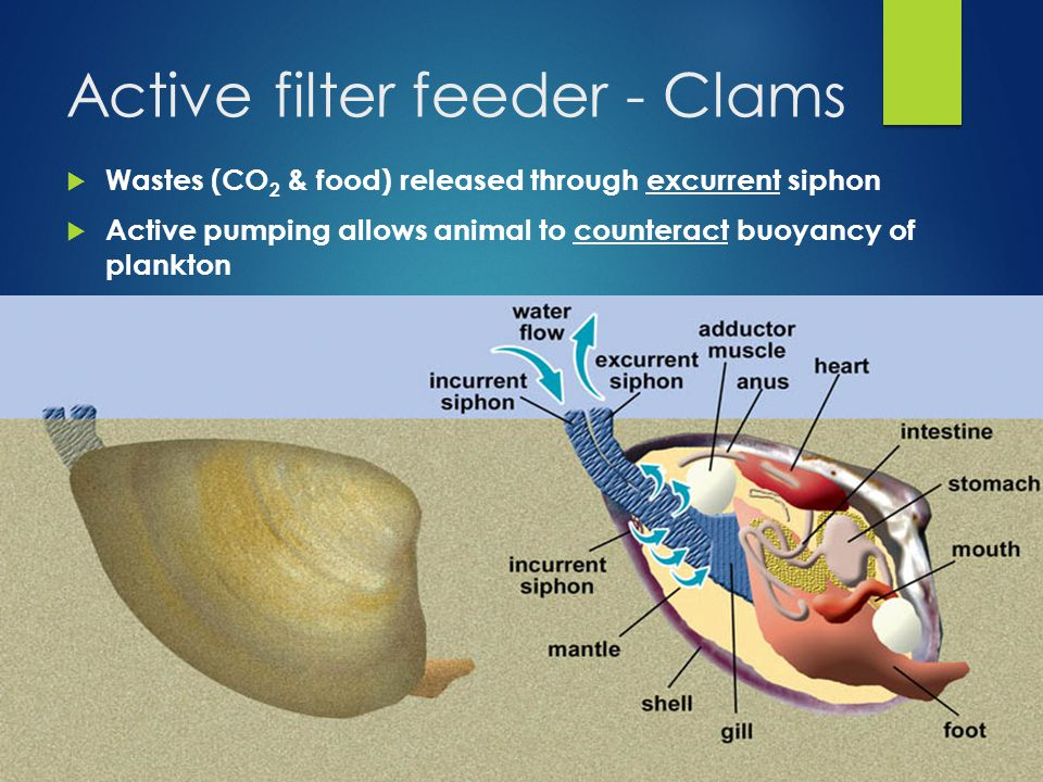 introduction to marine invertebrates