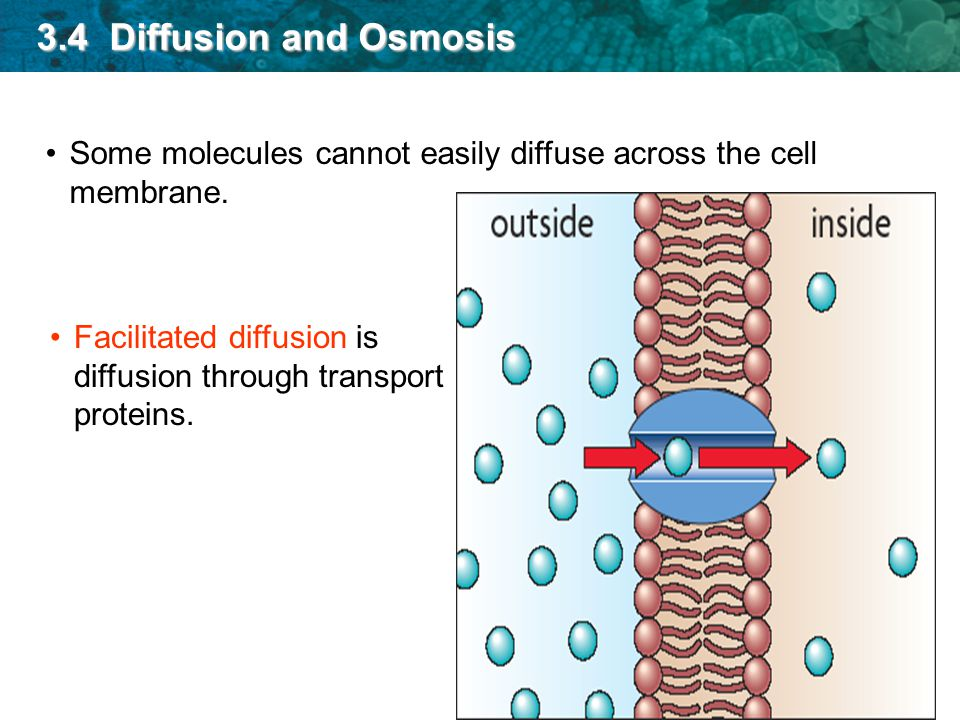 What is Membrane Transport?